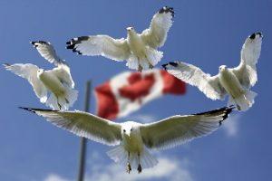 Flying Canada Flag & Pegon